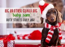 Why not announce it to your whole family this Christmas by giving your dog a sign to hold. This is just too cute for words!