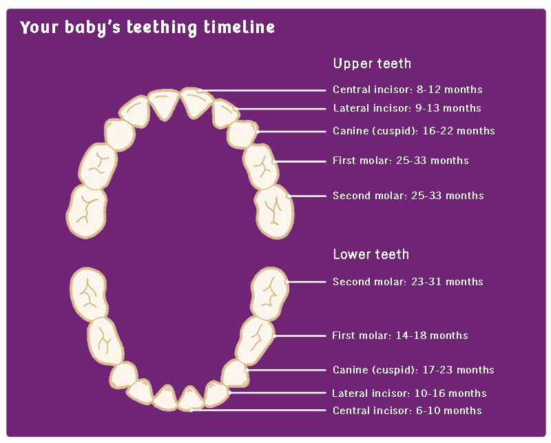 how baby teeth appear