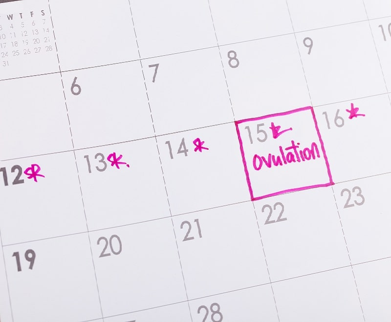 what-is-ovulation