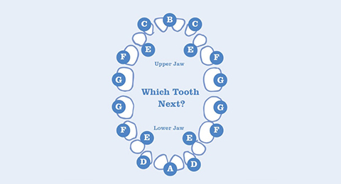 what order do baby teeth appear in